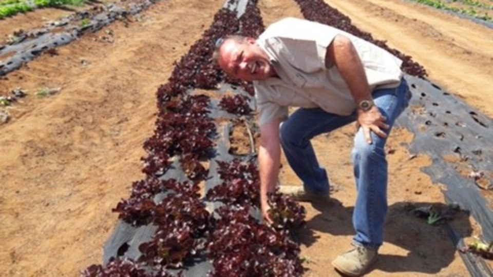 dr Andre lettuce